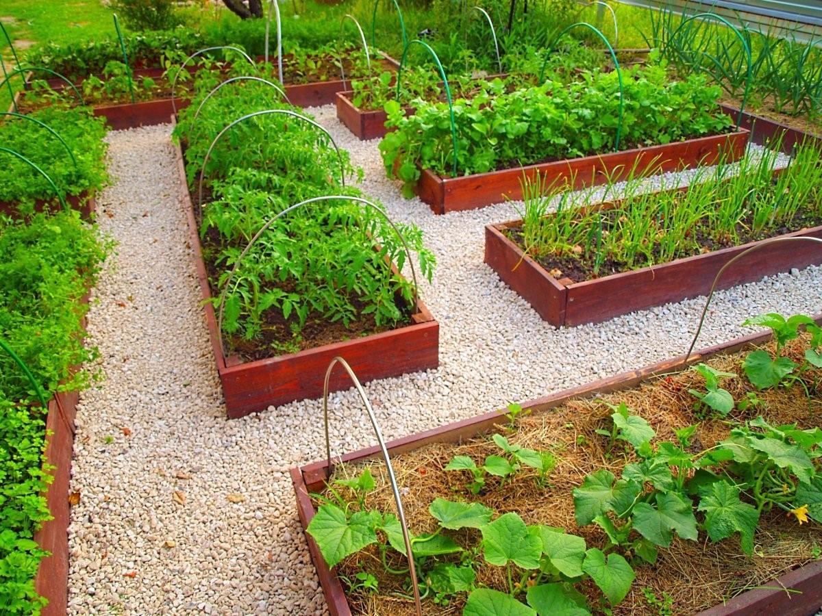 большинстве как распланировать огород и сад фото красивое звучное