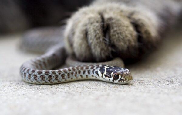 Атака кота