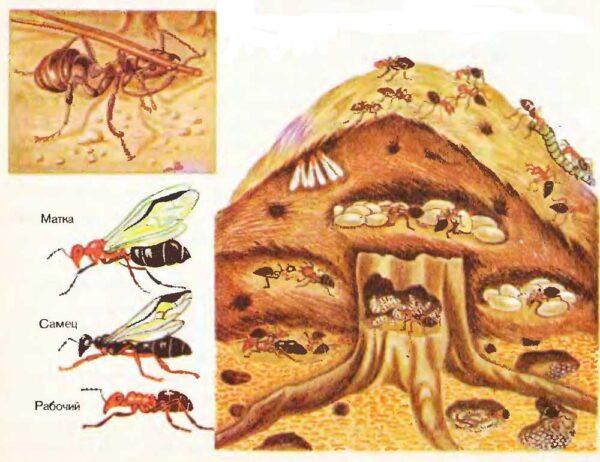 Обустройство муравейника