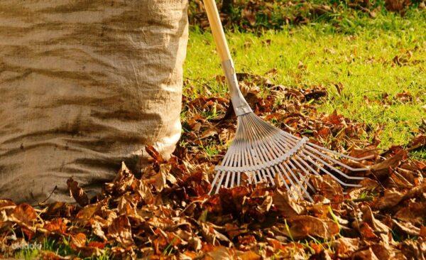 Уборка территории от сухих листьев