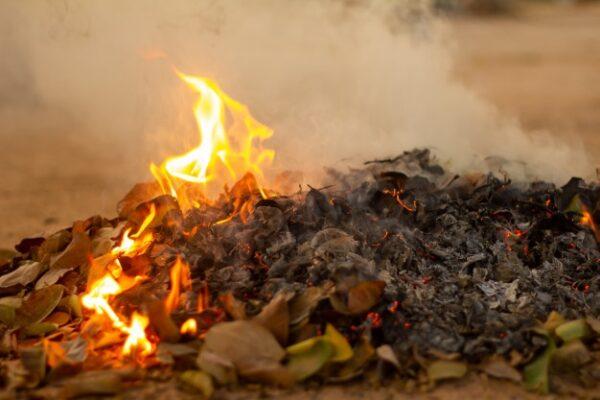 Сжегание засохших листьев