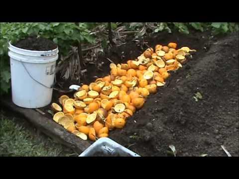 Удобрения из апельсиновой кожуры