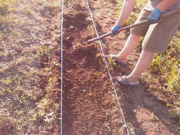 Подготовка почвы к посадке клубники