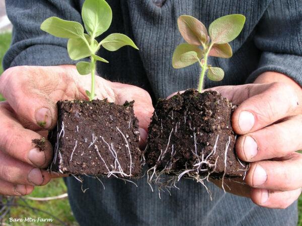 Удобрения для корневой системы ростений
