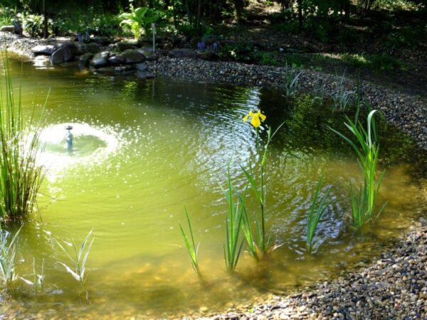 Водоём с зеленой водой