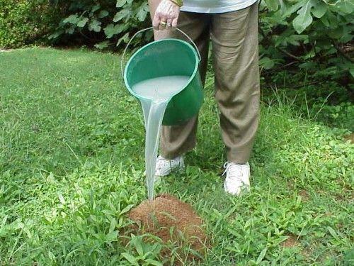 Кипяток против муравьев