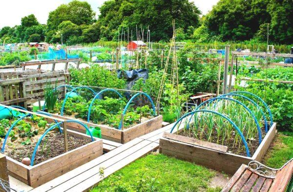 Подготовка огорода перед отпуском