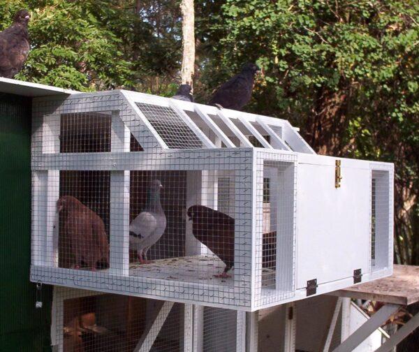 Конструкция голубятни