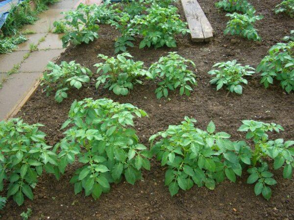 Почва - это важная составляющая для получения богатого урожая