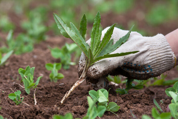 Удаление сорняков