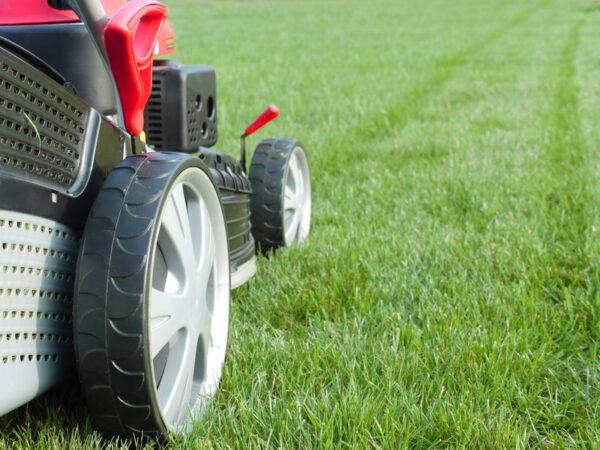 Необходимо стричь «первую» траву