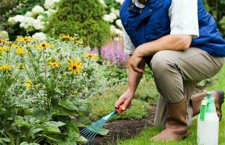 Создание гипоаллергенного сада