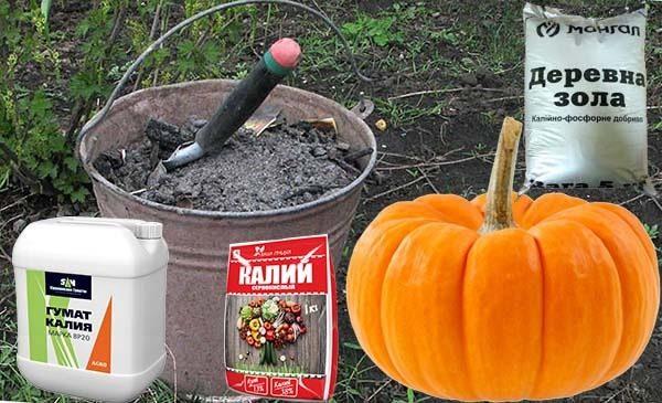 Внесение удобрений - это необходимо для должного роста и развития тыквы