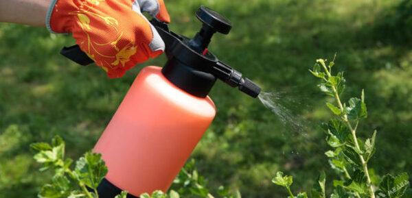 Обработка растений против вредителей