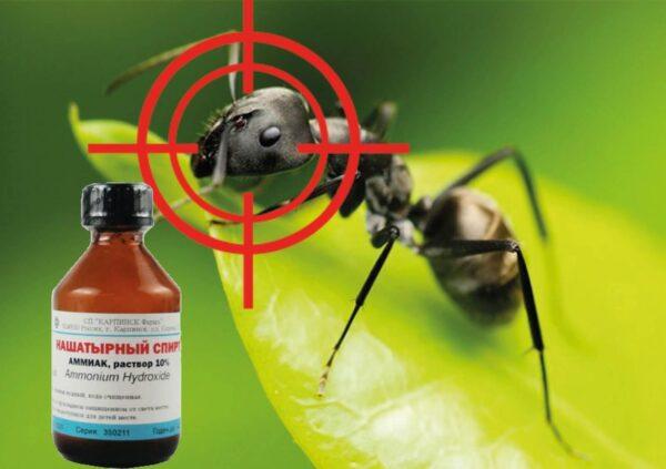 Нашатырный спирт - отличный боец против многих насекомых-вредителей