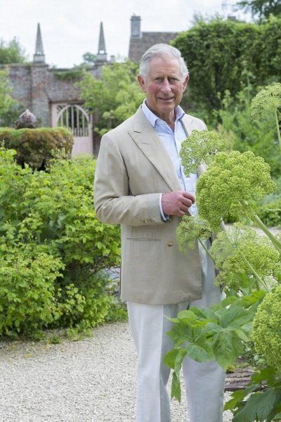 Принц Чарльз в своём саду любуется растениями