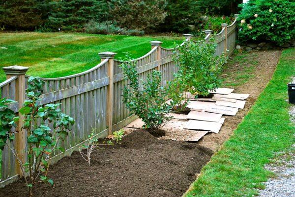 После перекопки и очистки от сорняков обрабатываем гербицидом