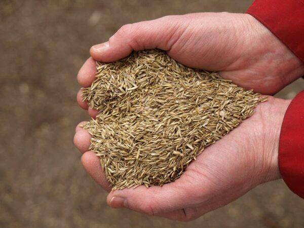 На семена лучше потратиться, тогда вы точно будете уверенны в качестве продукта