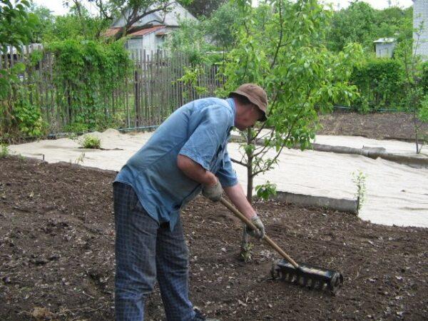 Удачное время для посадки выбранной вами культуры сулит вам только хороший «урожай»