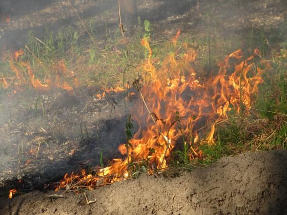 Сжигая сухую траву на грядках мы делаем почву не плодотворной