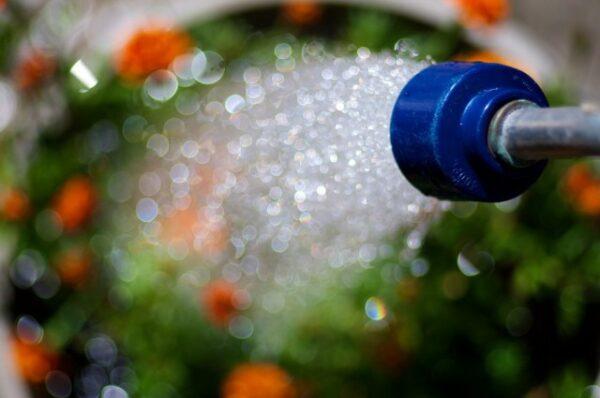 Полив сильным напором воды из шланга оголяет корни растений