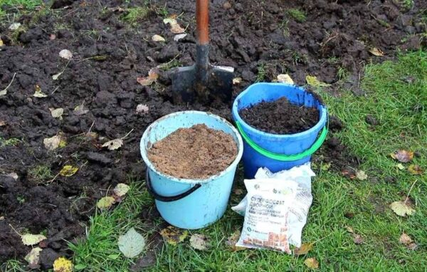 После удобрения, почву надо обязательно полить для лучшего впитывания микроэлементов