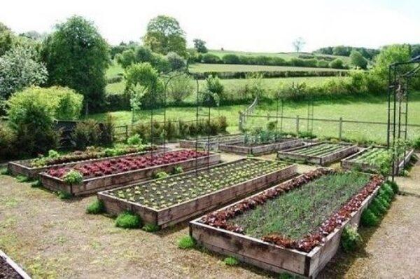 Не перекапываем гряды каждый сезон - упрощаем себе работу на огороде