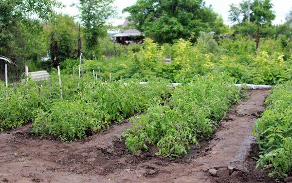 Избавляемся от обычной работы на огороде