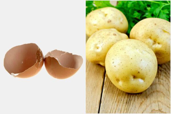Удобряем при помощи яичной скорлупы