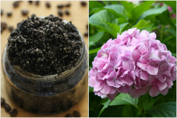 Удобряем любимые цветы с помощью кофейной гущи