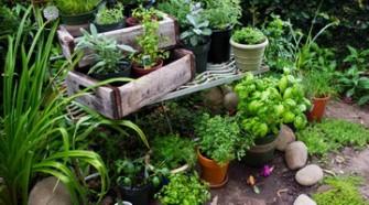 Знание о полезных веществах в растениях сэкономят вам ваши денежки