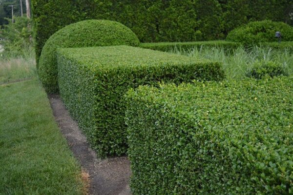 Живая изгородь в виде прямоугольников