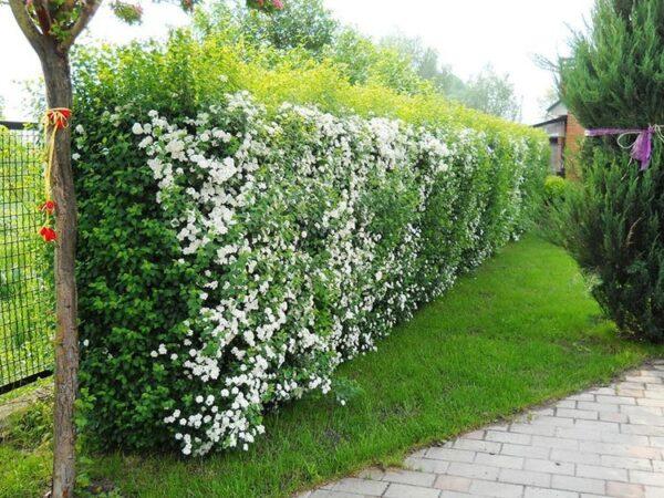 Украшаем нашу стену цветущими растениями