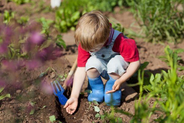 Ребенок помогает в посадке растений на даче