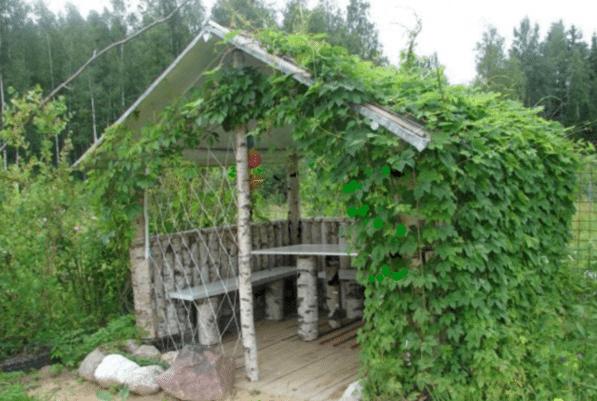 Используйте подручные материалы, чтобы сократить статью расходов, к примеру, стеной может послужить вьющееся растение (на фото)