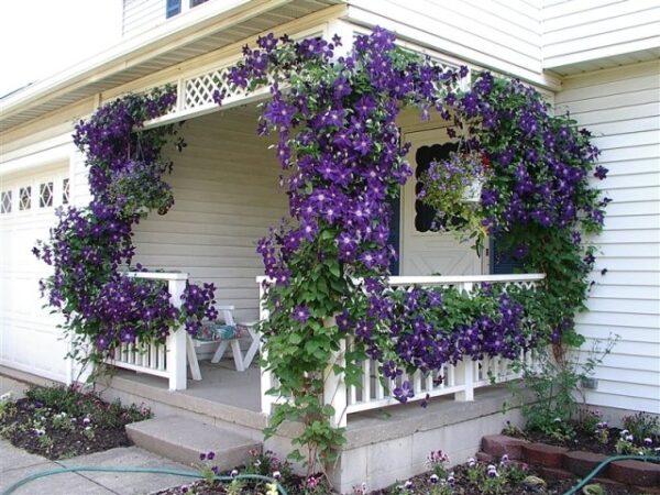 Клематис – красивоцветущий многолетник. Отличное украшение любой конструкции.