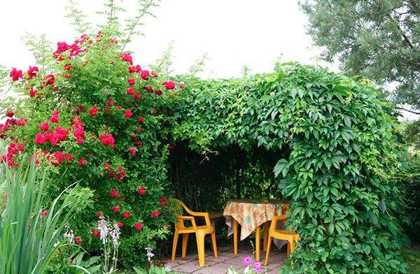 Кругом зелень, цветы, свежий воздух – красота, да и только!