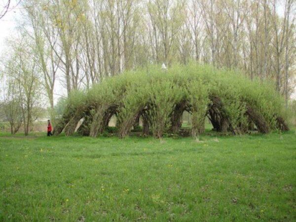 На фото - огромный зеленый шатер из ивы