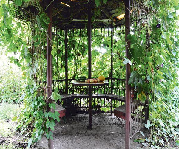 Постройка, укрытая зарослями винограда