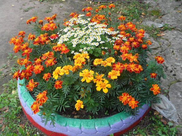 Цветы всегда позитивно влияют на людей любого возраста