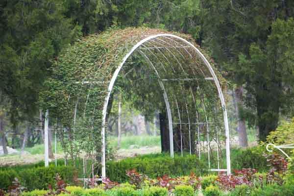 У стоек такой перголы желательно посадить плетущиеся растения, которые и создадут живой зеленый настил, спасающий от жары в летний зной.