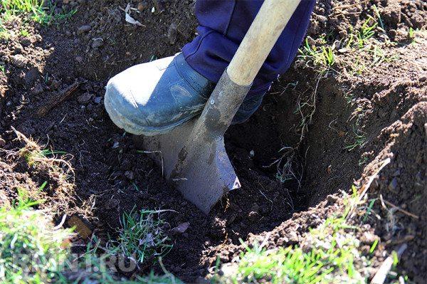 Выкапываем ямы под столбы.