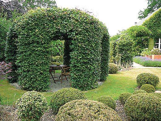 Вьющиеся растения могут создать превосходный шатер для отдыха